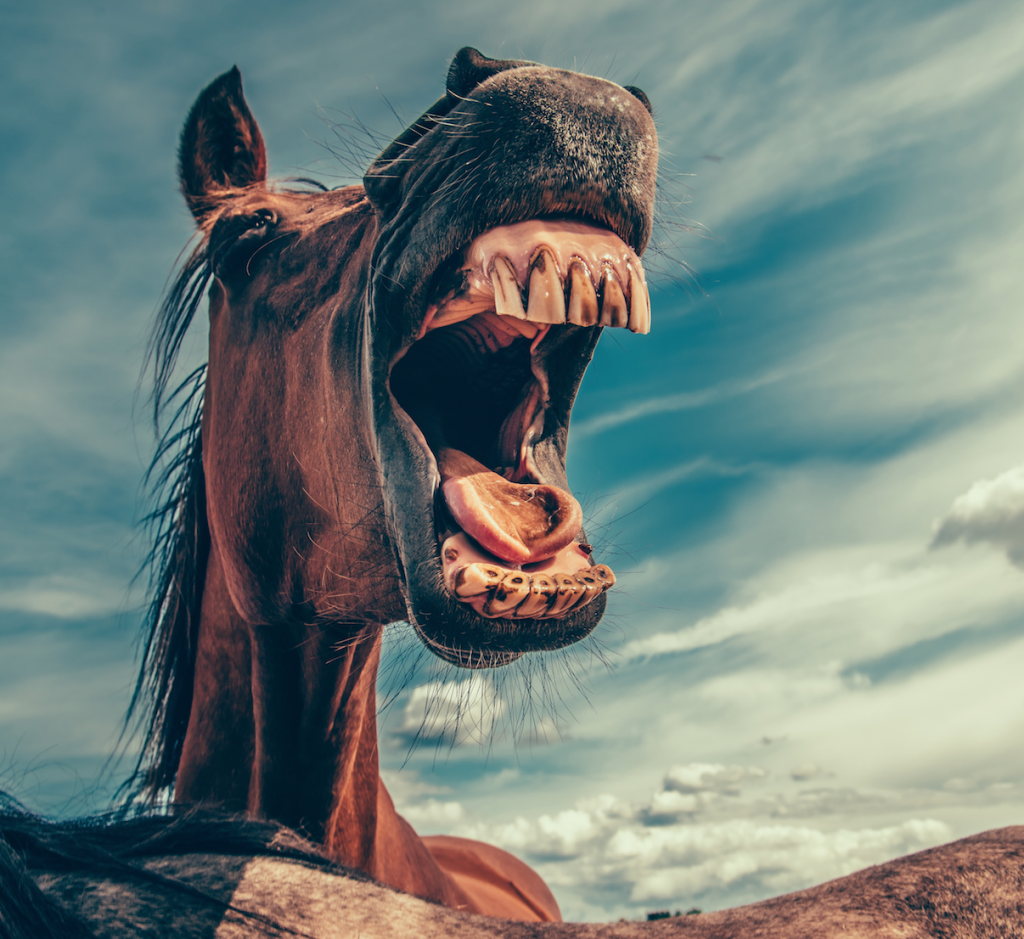 Pferd gelbe Zähne Shisha